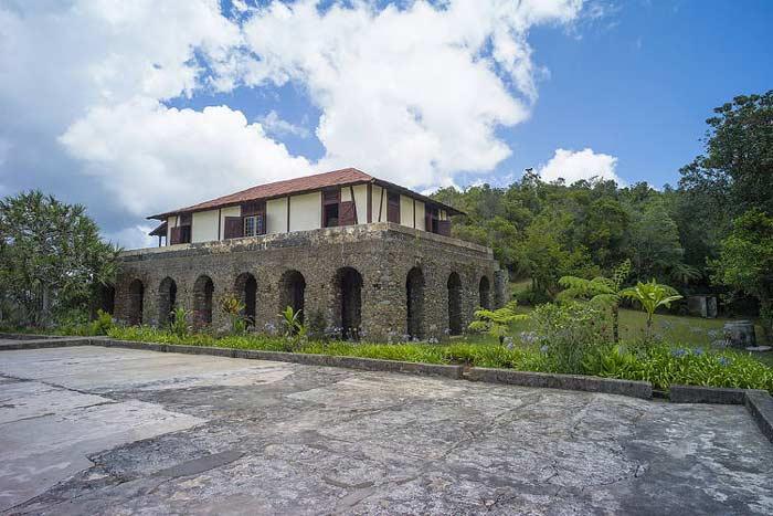 Cuban coffee plantation